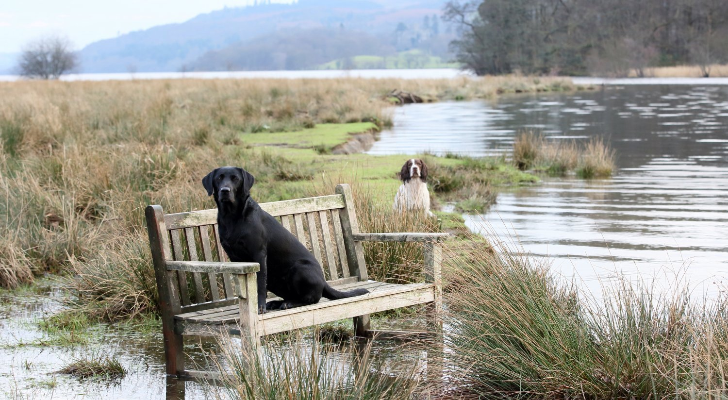 Dogs are welcome at Rothay Manor