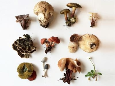 mushroom-foraging